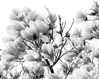 Floral Canvas - Black and White Fine Art Print - Magnolia Tree - Spring Decor - Canvas Print - Floral Wall Decor - Black and White Canvas