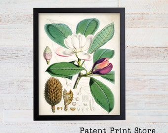 Vintage Magnolia Print. Botanical Print. Art Print. Magnolia Art. Antique Botanical Prints. Wall Art. Farmhouse Decor. Dining Room Art. 032