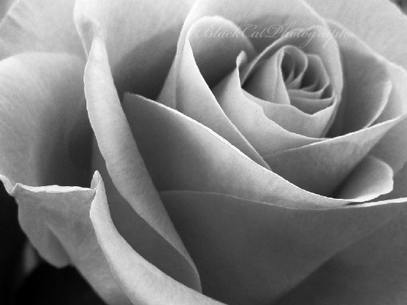 Items similar to black and white art flower photo print love valentines day romantic rose photography for her flower wall decor elegant photo wall art on