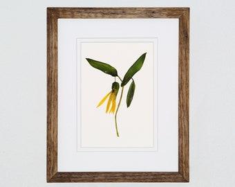 Pressed Flower Art, Bellwort, 8x10, Pressed Botanical Art, Gift for Mom,  Mother's Day Gift, Wildflower Art