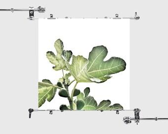 Leaf Print, Leaf Photo, Leaf Print Photo Green Leaf Print Green Leaf Photo Green Leaf Fig Print Fig Photo Fig Leaf Print Digital Photography