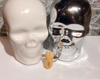 Faux Human Tooth ring , comes in a ring box with many to choose!
