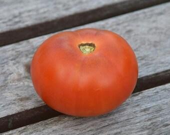 Tomato 'Sirius' - Heirloom Tomato Seeds (2016 Harvest)