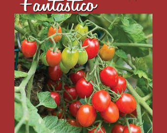 Fantastico F1 Hybrid Cherry Tomato Seed 25 ct Packet | AAS AWARD WINNER
