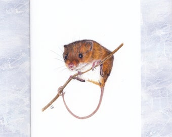 Harvest Mouse Card, Wildlife, Nature Illustration, Birthday Card, Thank you Note