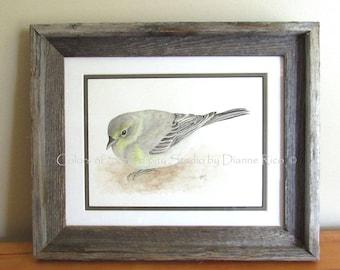 """Paruline des pins - Songbird aquarelle originale peinture avec cadre en bois Grange, Double emmêlé, 13 3/4 """"x 16 1/2"""" de l'hiver"""