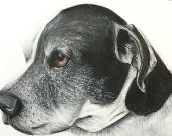 Pet portrait custom drawing from photo dog drawing photo to drawing dog memorial pet keepsake dog gift pet memorial pencil drawing