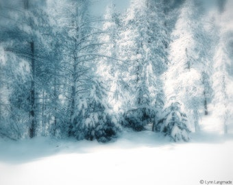 """Nature Photography - winter photograph, trees covered in snow, Christmas, decor, winter wall art - blue photo - """"Snowy Wood"""""""