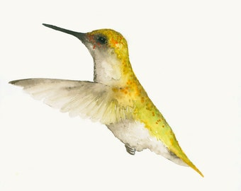 Hummingbird Art Fine Art Print from Original Watercolor