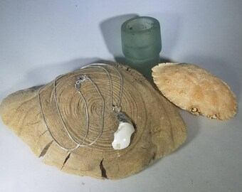 Real Coastal Maine White Shell Pendant Necklace