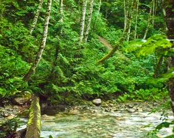 Landscape photography, B.C., British Columbia, mountains, forest stream, forest, wall art, nature,