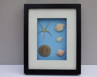 Starfish, sand dollar, sea life