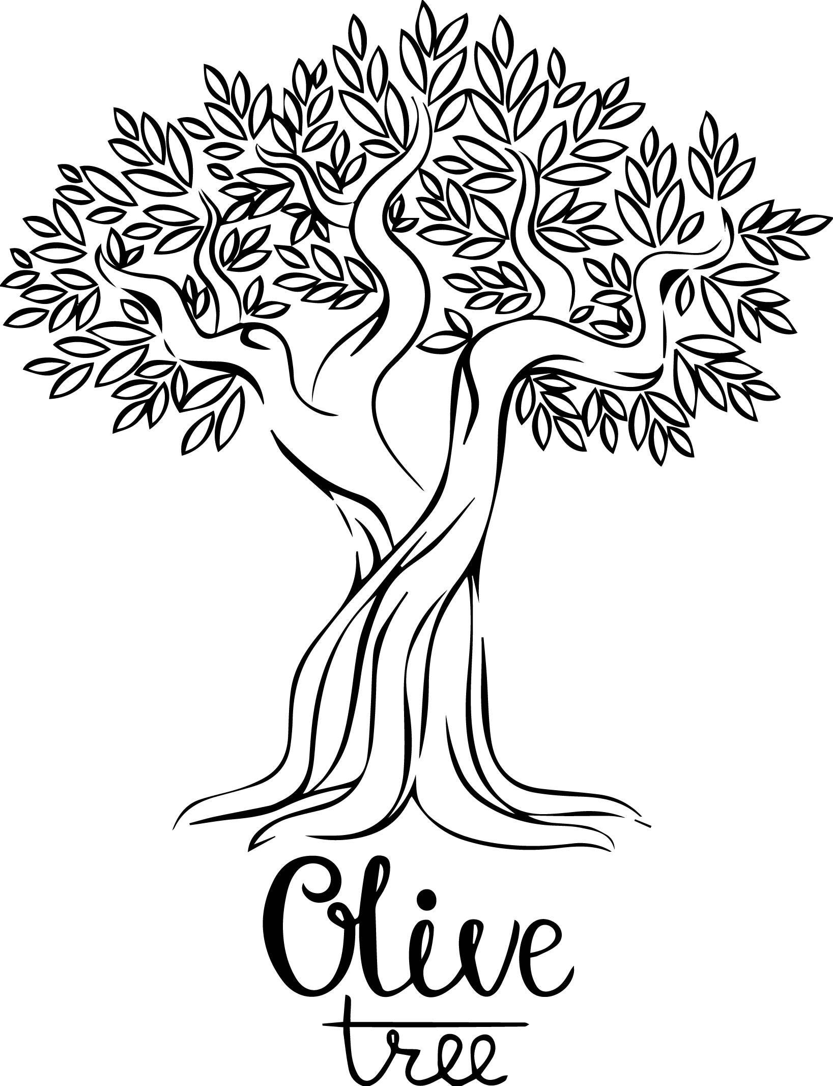 Olive Tree Nature Plant Agriculture Mediterranean Organic