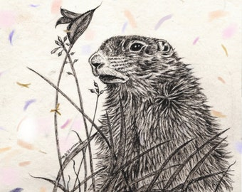 Ground Hog Day Greeting Card Note Card  Pen and ink arctic groundhog art