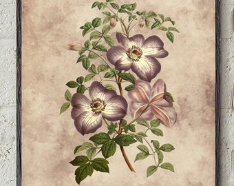 Botanical flower print,1858, Clematis flower print, Clematis, flower,#20,Vintage, DIGITAL DOWNLOAD