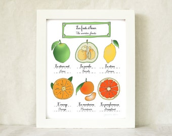 Kitchen Art 'Winter Fruits' - 8x10 art print of original illustration - French Retro Kitchen home decor botanical chart