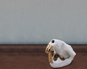 SALE: muskrat, 14k gold teeth
