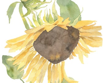 Sunflower, 8 x 10 watercolor print
