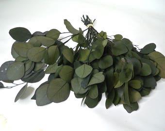 Preserved Eucalyptus Populous leaves Green,  Eucalyptus leaf, Preserved Eucalyptus leaf for craft, Bouquet of Eucalyptus