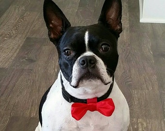 Doggie Bowtie - made to order in the color and size of your choice. Pictured bow is 4 x 1.5 inches. Velcro fastener wraps around collar.