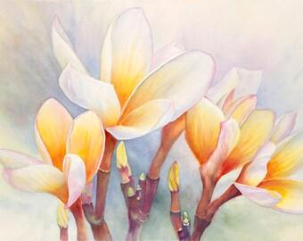 Plumeria Painting Art Print