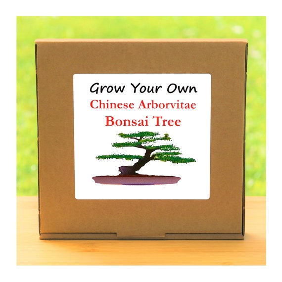 Gardening Gift - Grow Your Own Chinese Conifer Bonsai Tree Kit