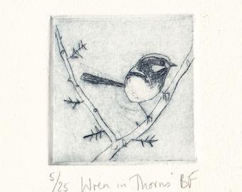 Superb Fairy Wren, Wren In Thorns, Original Dry Point Etching, Australian Native Bird, Miniprint