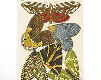 Moth Pull Down Chart - Vintage Illustration Reproduction. French Seguy Plate 14 Variety of Moths Chart Diagram Poster. Entomology CP275cv