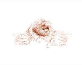Kunstdruck einer Bleistift-Zeichnung, Sepia-Farbvariante  - Maulwurf (30 x 21 cm)