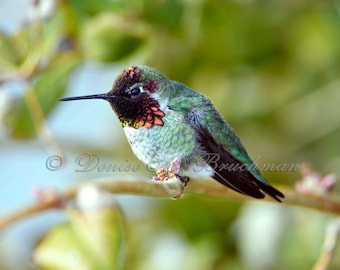 Hummingbird Art Birthday Gift - Pink Green Bird Print - Hummingbird Photo Bird Art Hummingbird Print Hummingbird Gift Hummingbird Decor