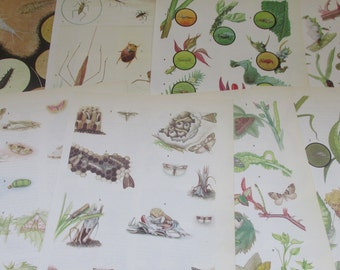 A Grab Bag Selection of Ten Vintage Coloured Insects Book Plate Prints - Mixed Lot