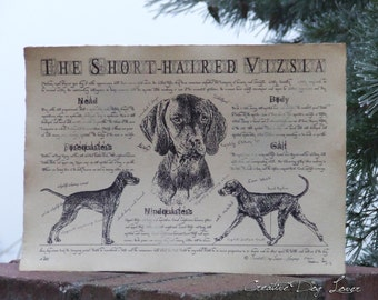 Antique styled dog standard - Hungarian Short-haired Vizsla