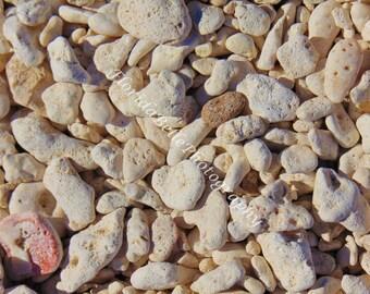 Rocky beach in Key West, fl