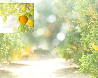 Bokeh Orange Orchard 2 Different Files Orange Grove Citrus Photography Background Studio Backdrop Instant Art Digital Downloads