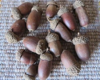 Acorns,craft acorns,14/pkg,fall craft embellishment,florals,wreaths,oak, nuts