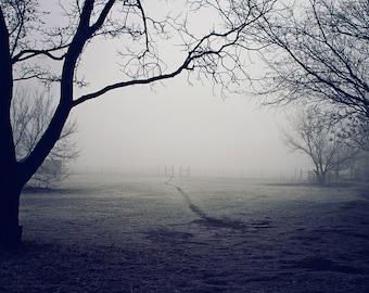 Monochromatic Wall Art - A Winter's Walk - frost, trees, fantasy, landscape photography, winter