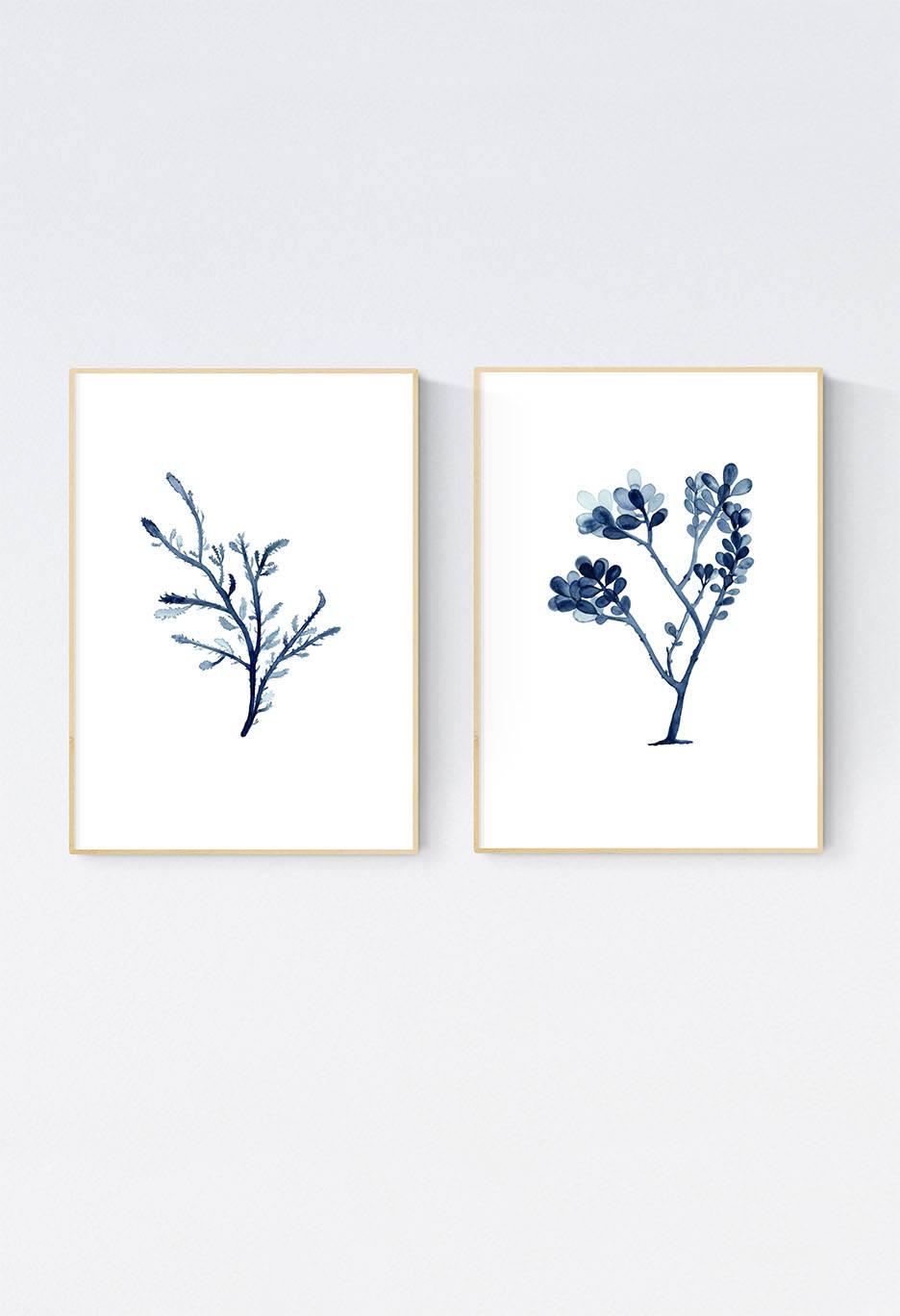 Indigo blau Algen Drucke Set von zwei Meerespflanze