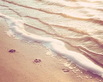 "Beach Photography, water ripples paw prints beige peach light brown ocean photograph neutral cream wall art, 11x14, 8x10 Print, ""Paw Prints"""