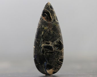 Fossilized Palm Wood Root Polished Organic Gemstone (V2687)