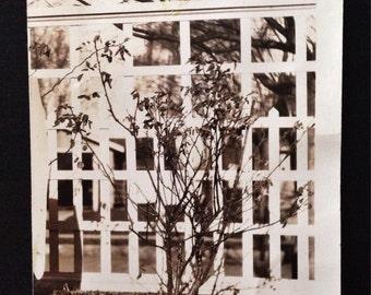 Original Vintage Photograph | Our Fence