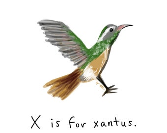 X is for Xantus Print