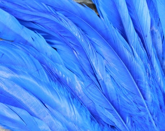 Premium Coque feathers in Royal Blue- length 7-10 inches in length-Tahitian costume