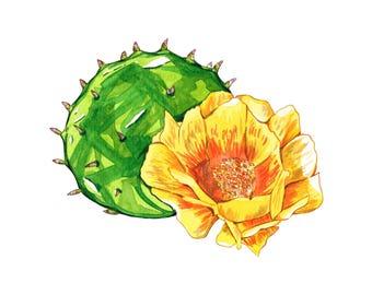 Prickly Pear Cactus, Watercolor Succulent, California Art, Arizona Art, Cactus Flower, Terrarium Print, Succulent Print, Cactus Art, Cacti