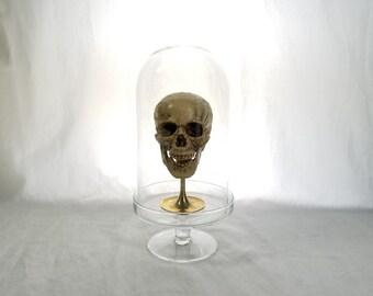 Skull in glass dome display