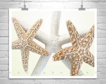 Sea Shell Art, Bathroom Wall Art, Seashell Picture, Starfish Decor, Star Fish Picture, Picture for Bathroom, Home Decor, Gift for Mom