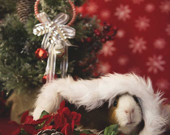 Snuggly Guinea Pig Holiday Greeting Card