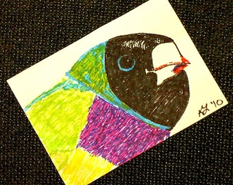Gouldian Finch ACEO Bird Portait Original  Color Drawing OOAK