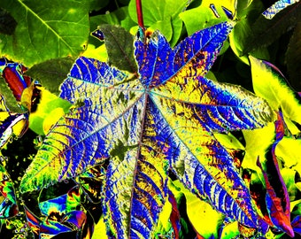 Blue and yellow leaf