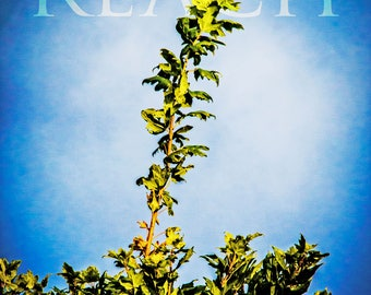 "Reach  - Photograph - 8"" x 10"" matted and signed"