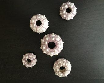 Sputnik Urchin - Set of 5